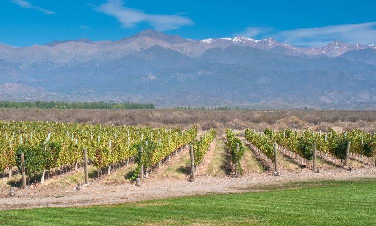 Conheça agora a rota de vinho em Mendoza e apaixone-se!