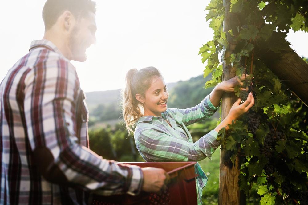 5 lugares da rota do vinho do Brasil que você precisa conhecer!